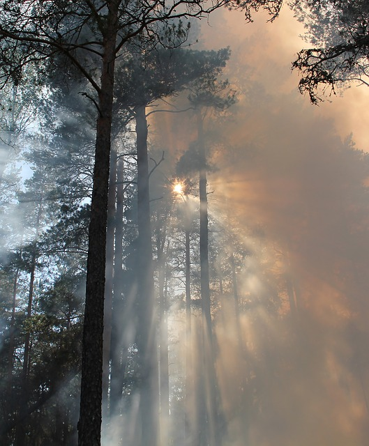 forest-fire-433683_640